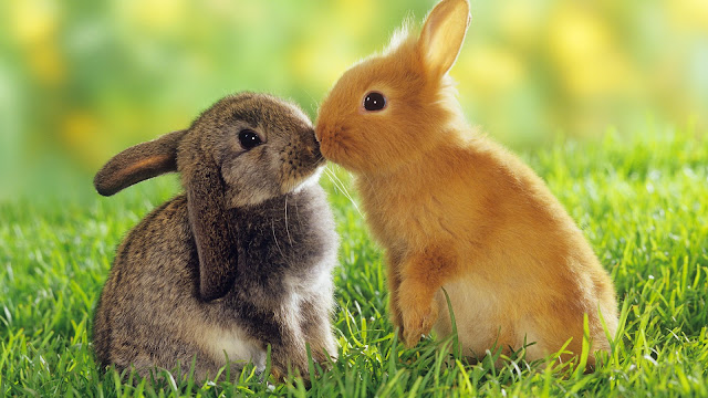 Cute Loving Bunnies
