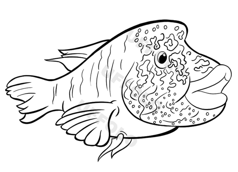 Disegni da colorare gratis per adulti - Pagine da colorare pesci per adulti ...