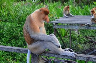 Pulau Kembang, Pilihan Rekreasi Di Banjarmasin