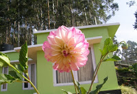 munnar homestays, cheap homestay in munnar, homestay in munnar outside city