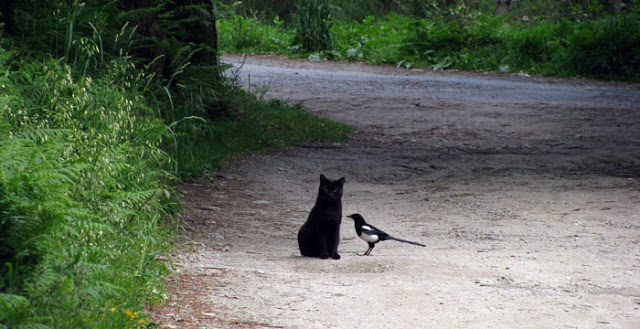 gato e passáro num caminho de terra