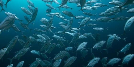 Aplikasi Cara Tangkap Ikan, Bukan Cari Ikan
