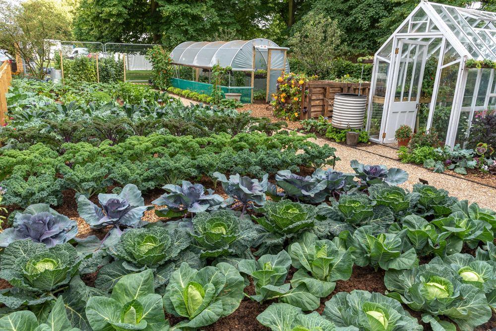 """Un jardín que muestra cómo cultivar alimentos abundantes durante todo el año sin alterar el suelo y da a conocer de qué manera el método de jardinería de """"no excavación"""" puede funcionar en cualquier área al aire libre, jardín o huerto compartido"""