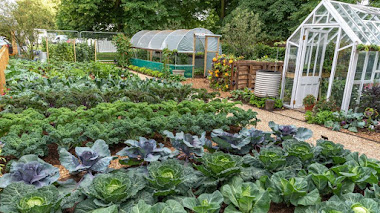 Jardinería sin excavación: del huerto a la cocina sin cavar la tierra