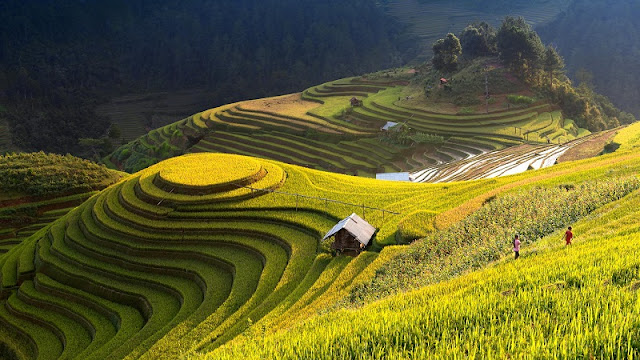 Mu Cang Chai is brilliant in the season of rice