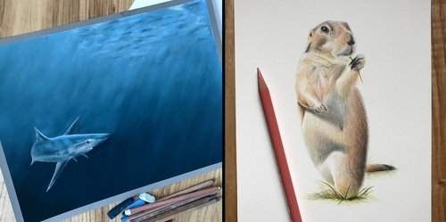 00-Paul-Miller-Wildlife-and-Domestic-Animal-Drawings-www-designstack-co
