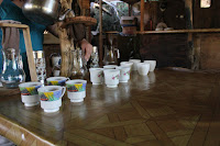 ORGANIC COFFEE PLANTATION