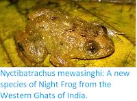https://sciencythoughts.blogspot.com/2018/03/nyctibatrachus-mewasinghi-new-species.html