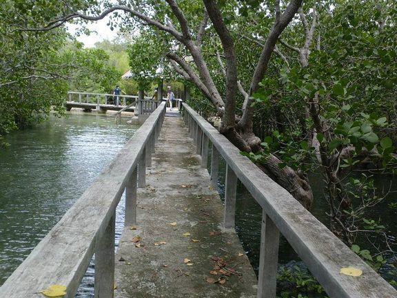 Talabong Mangrove Park near Dumaguete City