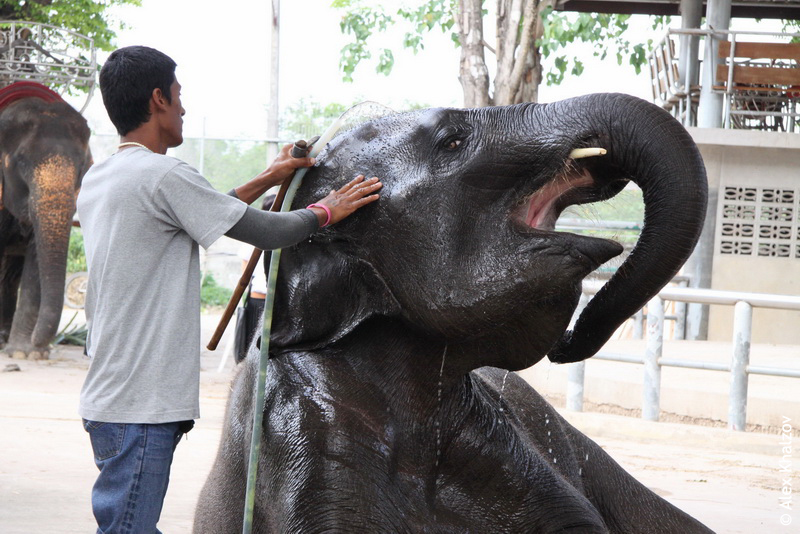 Доволен как слон