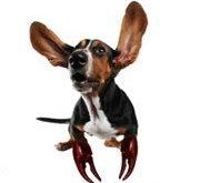 характер собаки по гороскопу,