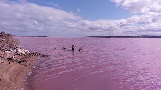Kolorowe zbiorniki wodne w Australii Zachodniej