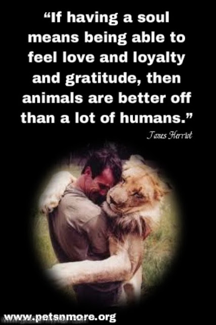 Love Animals Quotes Best Pets N More Inspiring Quotes For People Who Love Animals