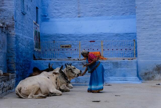 Vacas Sagradas na Índia