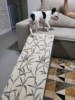 buldog rampa para sofá