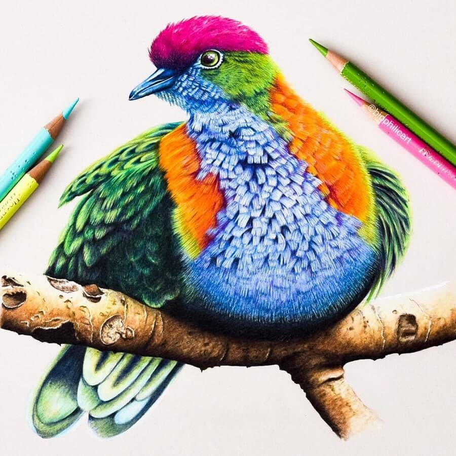 02-Fruit-Dove-Sallyann-www-designstack-co