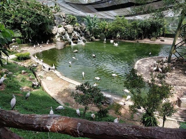 Pengalaman ke Taman Burung Negara Kuala Lumpur
