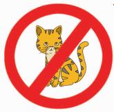dilarang membawa hewan peliharaan kucing www.jokowidodo-marufamin.com