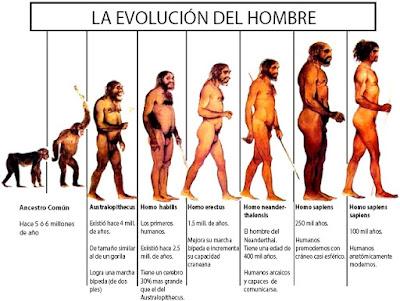 Imagen: Evolución del hombre con breve descripción