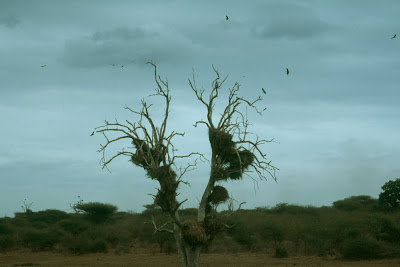 South Africa, Kruger National Park, weaver birds