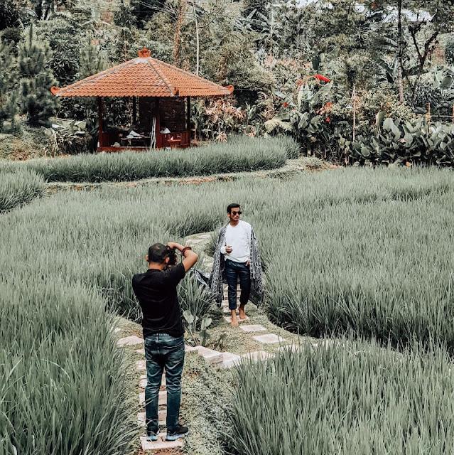 Sawah Segar Sentul Bojong Koneng Bogor