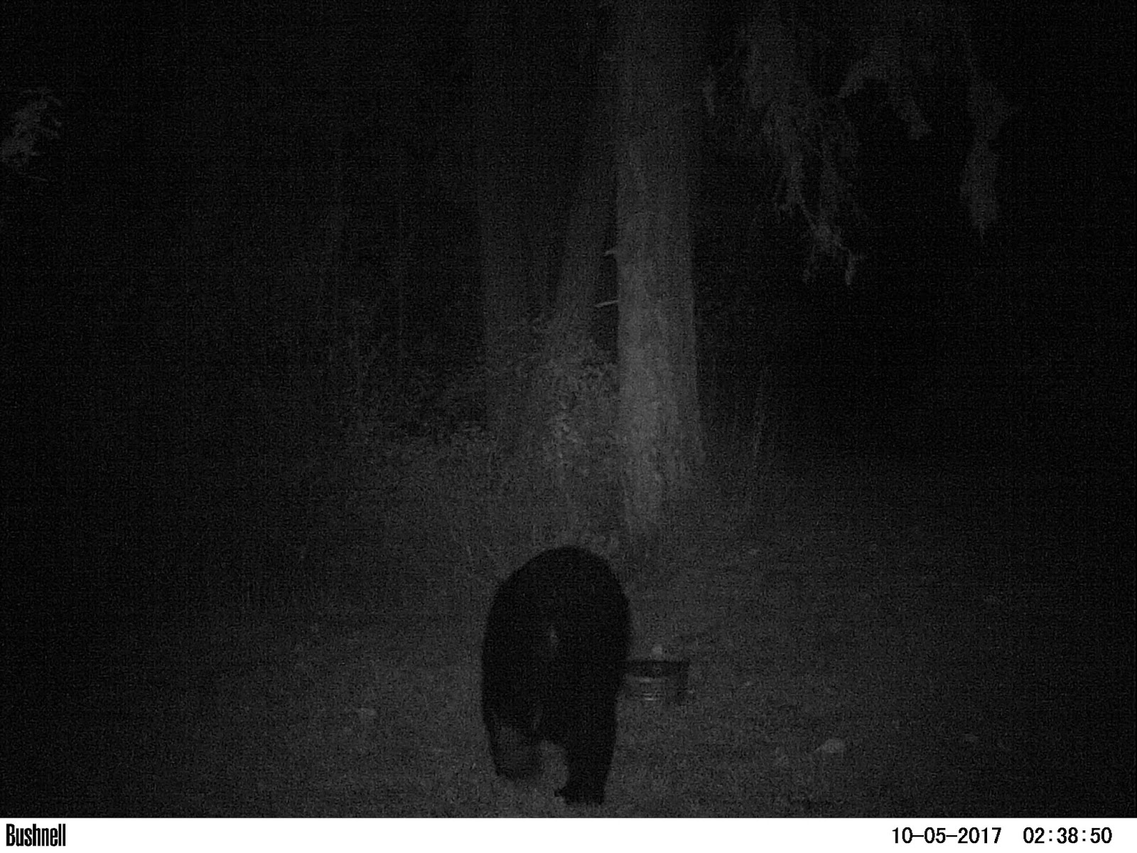 Garden Grumbles And Cross Stitch Fumbles October S Trail Camera Photos