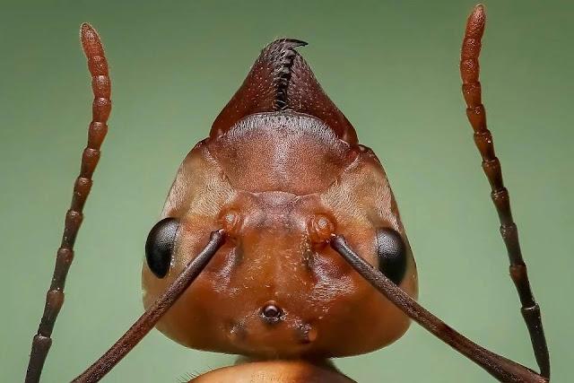النمل،النمل الأبيض،مكافحة النمل الأبيض،النمل الأسود،النمل الأحمر،تزاوج النمل،النمل الطائر،النمل الأبيض الطائر،انتشار النمل،بيض النمل،ملكة النمل،أضرار النمل الأبيض