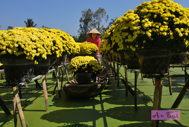 Visit the flower village of Sa Dec the days before Tet Holiday 2018