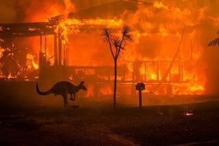 Ultrapassa um bilhão o número de animais mortos por conta dos incêndios avassaladores que castigam a Austrália desde novembro do ano passado.
