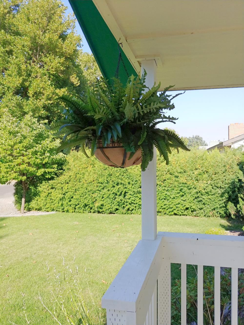 faux fern hanging basket