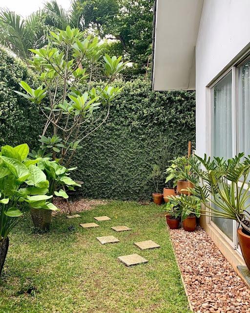 Desain Taman Belakang Rumah Sempit tapi Cantik dan Keren