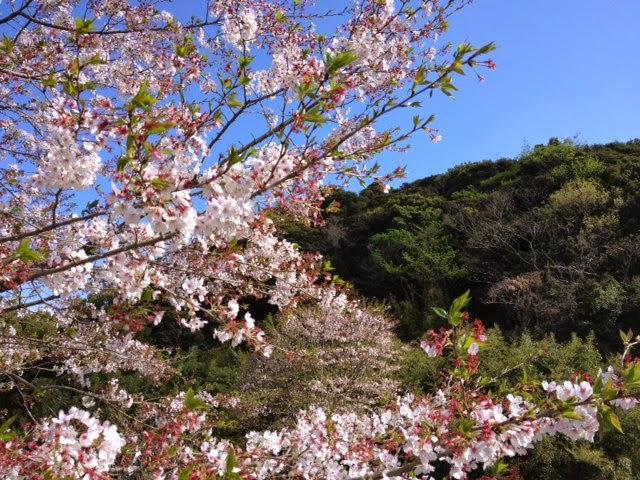 愛に恋! Eishin blog