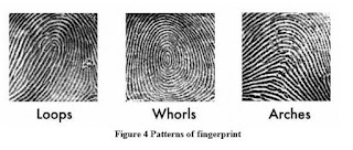 Pola Sidik Jari - FingerPrint Pattern