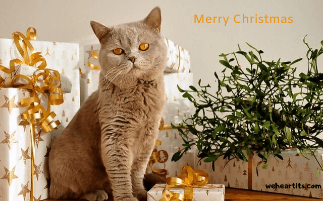 merry christmas video for whatsapp free download