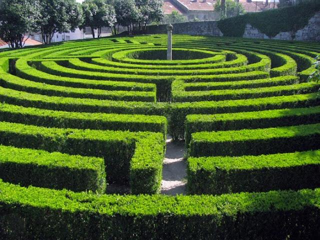 labirinto de arbustos