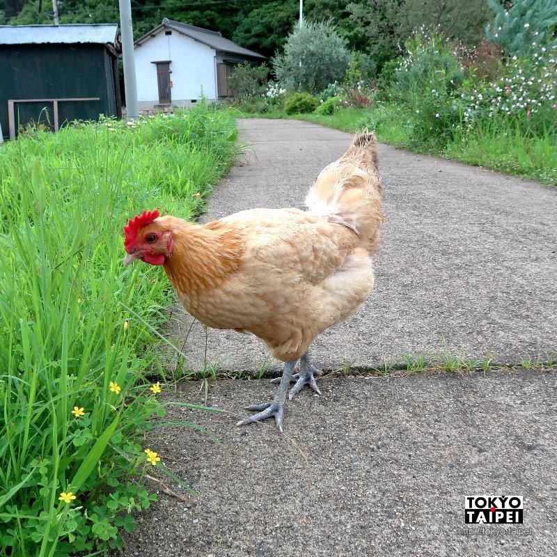 【犬島生活的植物園】文青風溫馨可愛小溫室 還養雞在路上亂跑