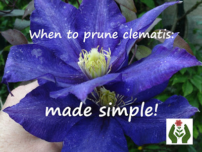 When to prune clematis - made simple Green Fingered Blog
