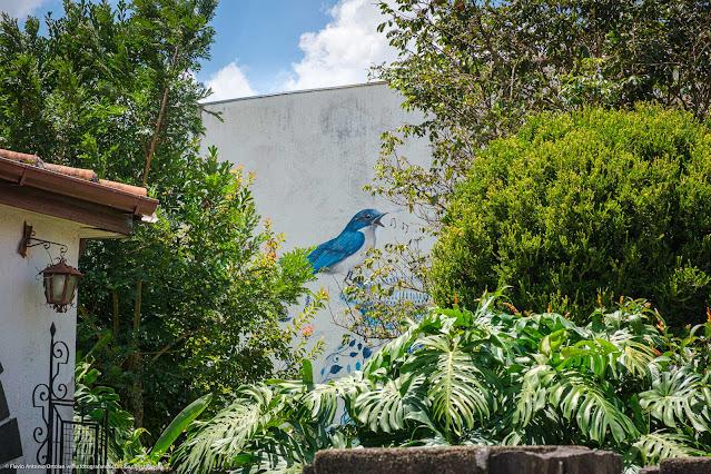 Grafite na parede lateral de uma casa