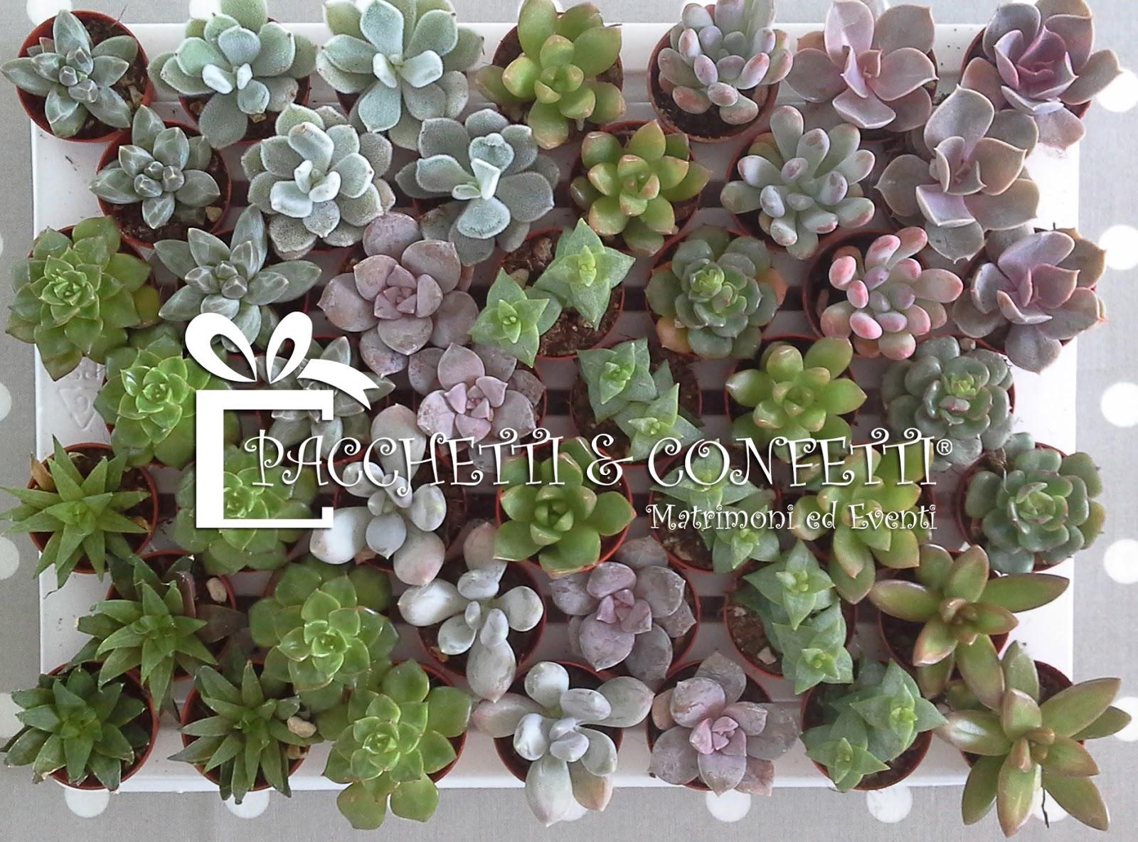 Eccezionale Pacchetti e Confetti: Bomboniere con piante grasse: domande frequenti EI63