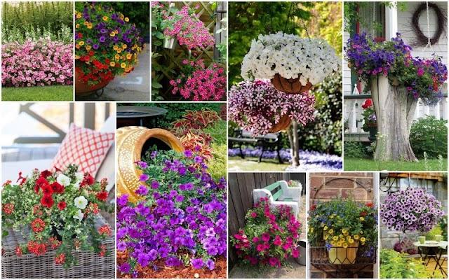Καλοκαιρινές προτάσεις για τον Κήπο ή το Μπαλκόνι σας με ΠΕΤΟΥΝΙΕΣ