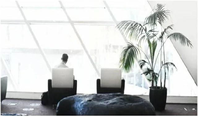 يمكن أن تضيف نباتات أوراق الشجر الداخلية الكبيرة جمالًا ودراما إلى ديكور المنزل أو المكتب بالإضافة إلى المساعدة في إنعاش الداخل مع القليل من الطبيعة.