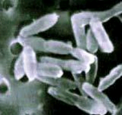 Bactérias Quimioautotróficas