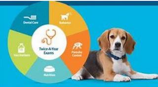 Розумна собака сечового міхура лікування та профілактики план