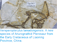 https://sciencythoughts.blogspot.com/2017/11/versperopterylus-lamadongensis-new.html