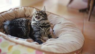 Limpieza de primavera: 10 cosas que los padres de gatos deben tirar ahora mismo