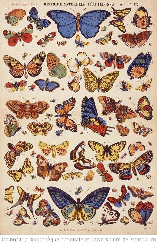 Borboletas | Papillons