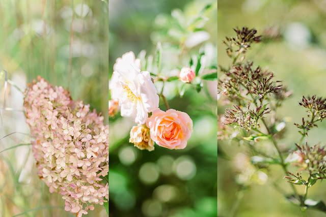 Herbst,Gartenimpressionen, Pomponetti