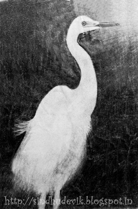Pelican Pencilart