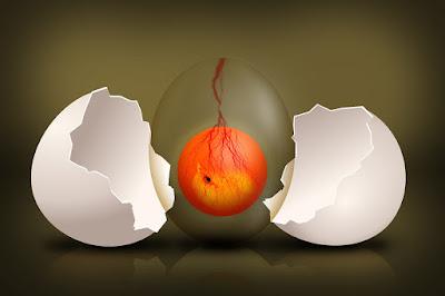 Penyebab telur ayam gagal menetas di incubator