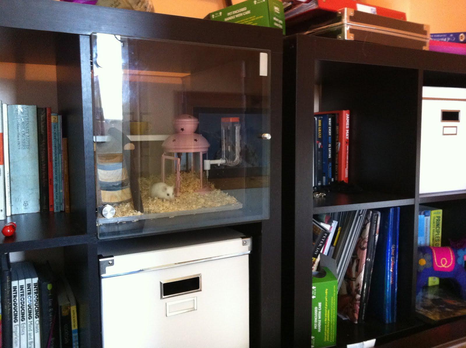 aquarium unterschrank ikea expedit. Black Bedroom Furniture Sets. Home Design Ideas